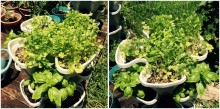 basil-and-cilantro-in-stackable-garden-1