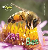 egg-to-bee