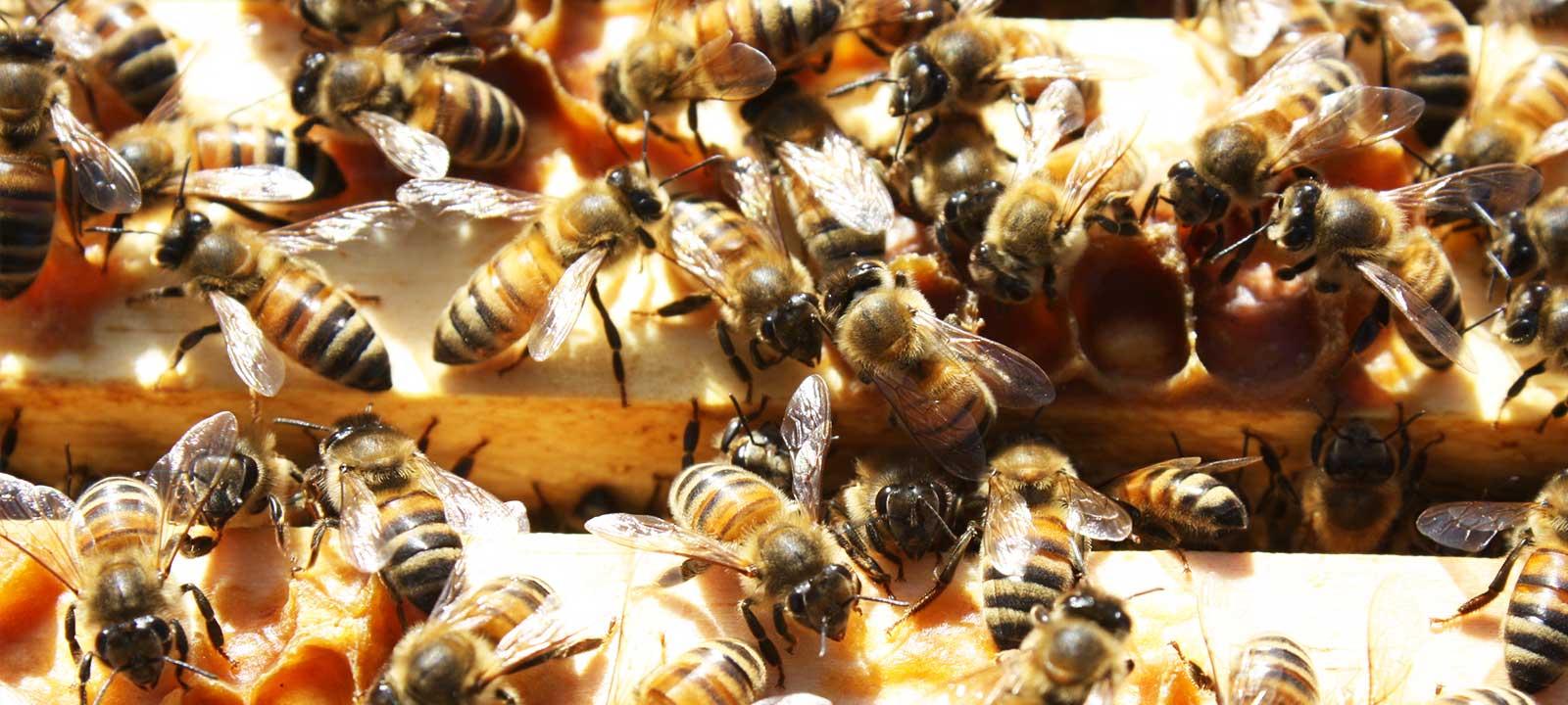 Prepper Bee Supply